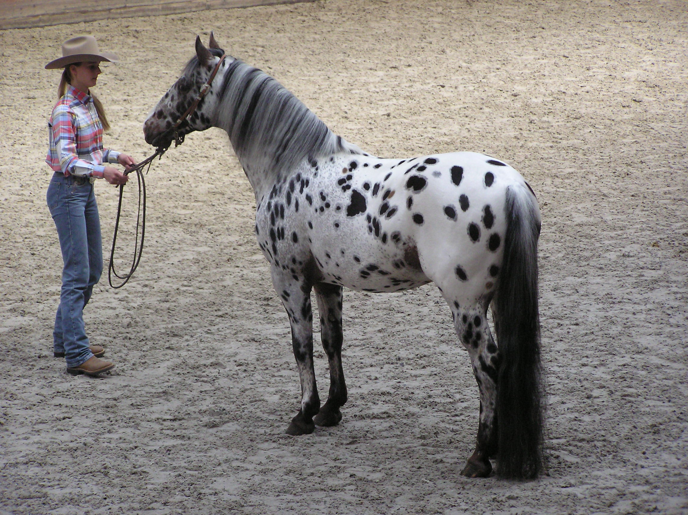 Appaloosa Pictures Video And Information