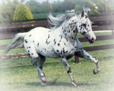 Information On Over 80 Horse Breeds