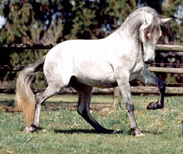 Кінь фото 1