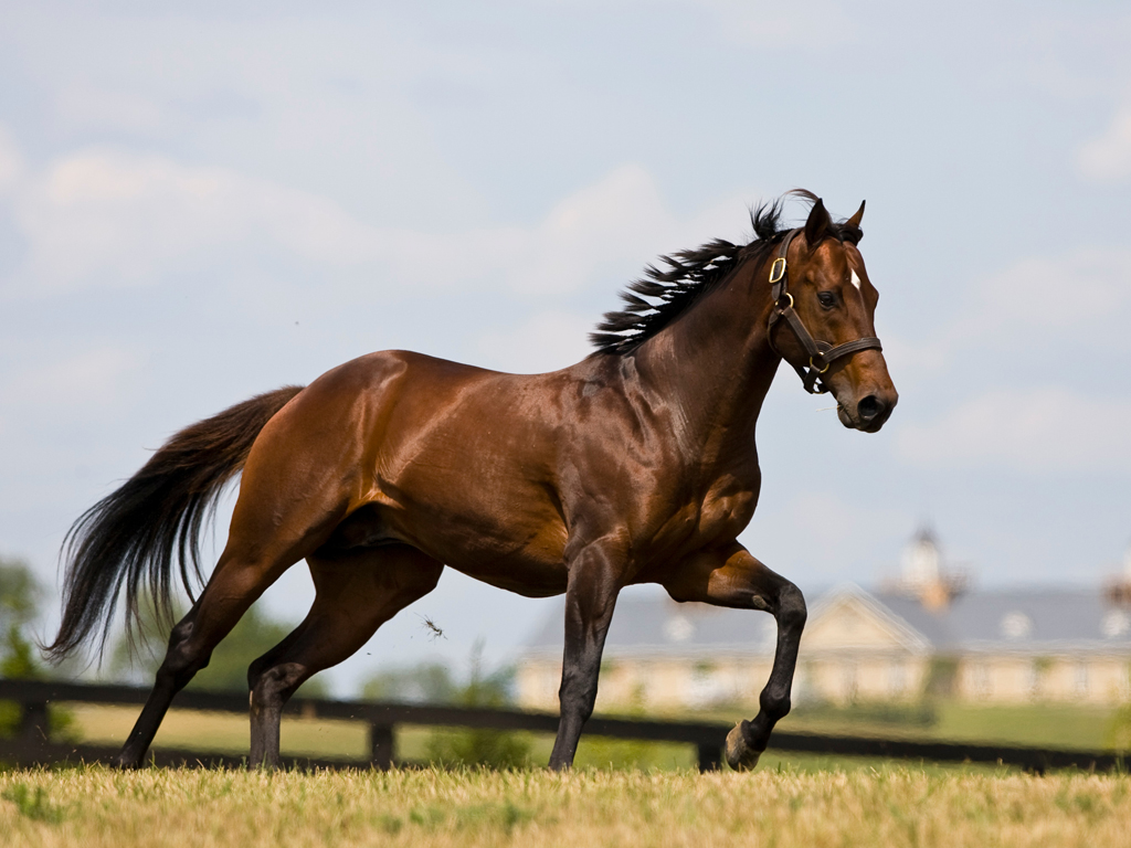 thoroughbred pictures video and information. Black Bedroom Furniture Sets. Home Design Ideas