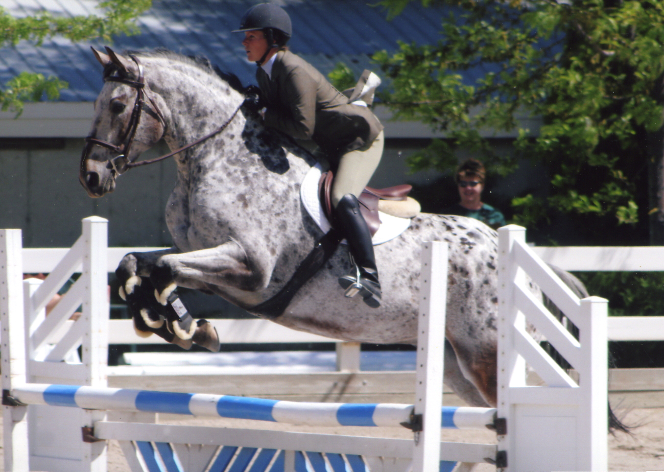 Top Five Breeds For Jumping